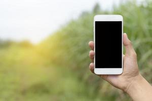 Hand, die Smartphone auf Naturhintergrund hält.