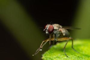 Fliege thront auf grünem Blatt auf schwarzem Hintergrund