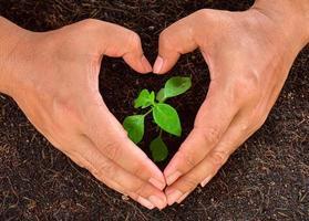 Menschenhände halten Baum, der jung pflanzt foto