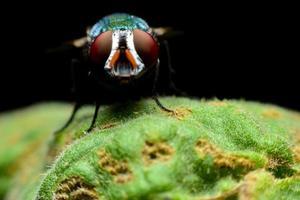 Fliege thront auf grünem Blatt