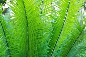 Nahaufnahme eines grünen Farns foto