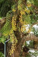 gelbe Blumen am Baum