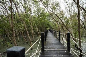 Gehweg im Mangrovenwald foto