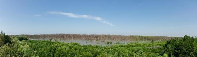 Mangrovenwald in Thailand