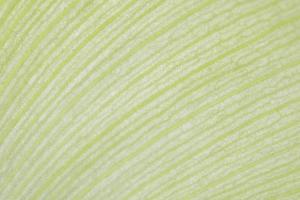 Hintergrund eines grünen Lotusblatts