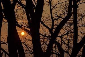 Schattenbild der Bäume bei Sonnenuntergang foto