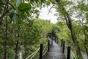 Gehweg im Mangrovenwald