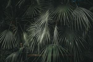 schöne grüne Palmen foto