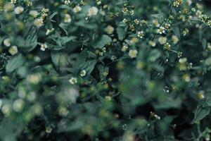 wilde Blumen in der Natur foto