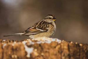 grauer und brauner Vogel in der selektiven Fokusfotografie foto