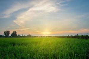 Reisfeld bei Sonnenaufgang foto