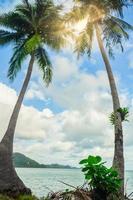 Kokospalmen auf Koh Chang foto