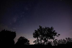 Silhouette eines Baumes in der Nacht