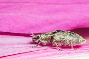 grüner Rüsselkäfer auf einer Blume foto