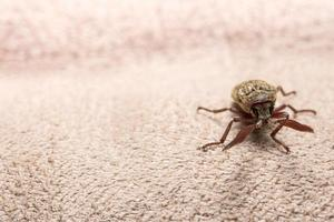 Klicken Sie auf Käfer auf braunem Hintergrund foto
