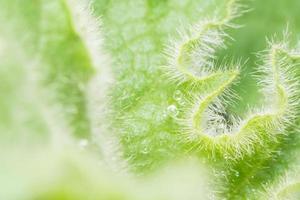 Wassertropfen auf eine Pflanze foto