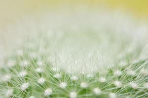 grüne Kaktus-Nahaufnahme