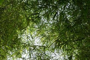 Bambusbäume und Blätter