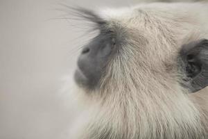 Nahaufnahme eines Affengesichtes foto