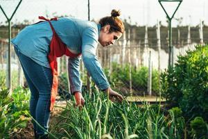 Landwirtin, die ein Zwiebelfeld in einem Bio-Bauernhof untersucht foto