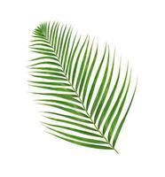 einzelnes Palmblatt foto