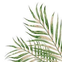 grüne und braune Blätter