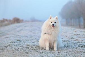 japanischer Stürmerhund, der im Winter auf gefrorenem Feld sitzt