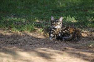 süße kleine streunende Katze, die auf Gras liegt
