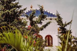 Orihuela, Spanien, 2020 - rote Blumen in der Nähe von weißem Betongebäude