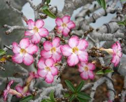 rosa Blumen in einem Garten draußen