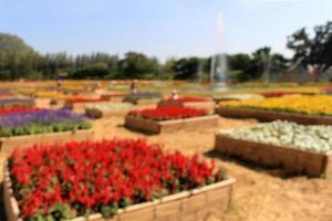 Unschärfe in den Frühlingsfarben Blumen und Gartenfeld foto