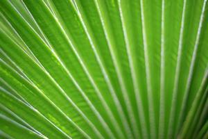 Linien und Texturen von grünen Palmblättern foto