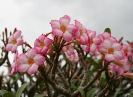 rosa Blumen gegen einen bewölkten Himmel
