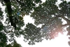 nackte Äste eines Baumes foto