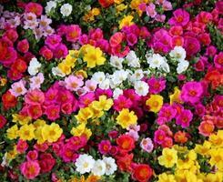 buntes Blumenbeet foto