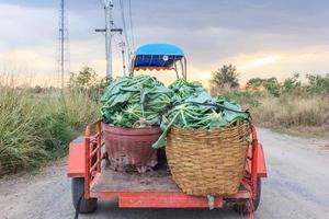Ackerschlepper holen Blumenkohlgemüse auf dem grünen Bio-Bauernhof ab. Thailand foto