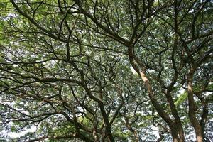 zu Bäumen aufblicken foto