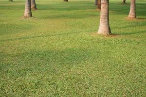grüner Park mit Bäumen