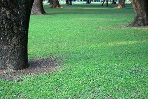 grüner Rasen im Stadtpark foto