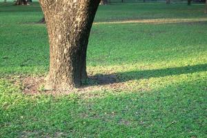 Baum und Gras