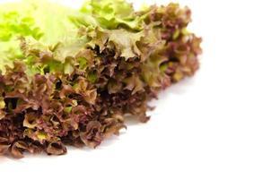 Salat aus roter Eiche