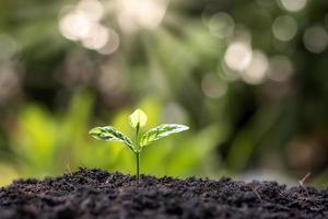 Pflanze im Sonnenlicht foto