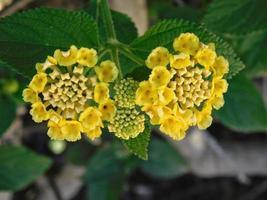 gelbe Blumen in einem Garten draußen foto