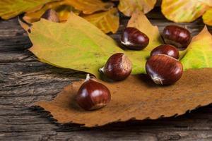 braune Kastanien auf Blättern foto