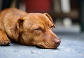 streunender Hund ruht auf dem Boden