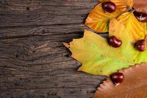 Blätter auf einer Holzoberfläche foto