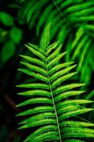 grünes Farnblatt foto