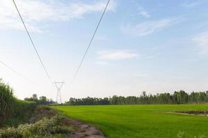 Stromübertragungsleitungen über die Reisfelder