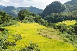 Reisfarm in Thailand