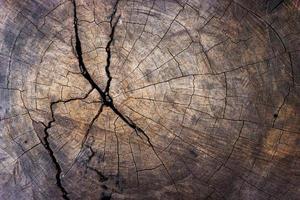 Nahaufnahme des Baumstumpfes für Textur und Hintergrund